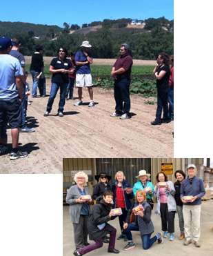Tours at the farm