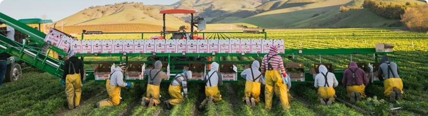 Harvesting the fields
